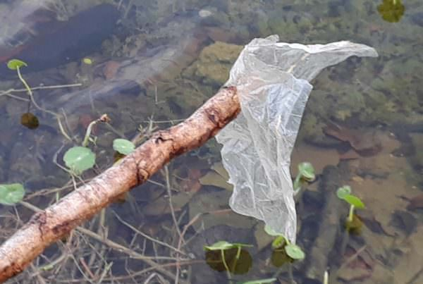 disposable plastic bag pulled from pond with stick