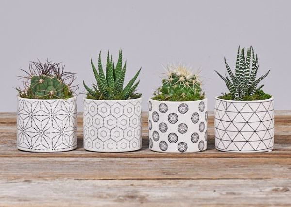 The Bouqs Co. mini succulent plants in ceramic planters