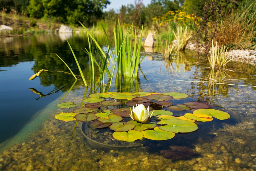 Natural Swimming Pools Benefits Considerations And Cost