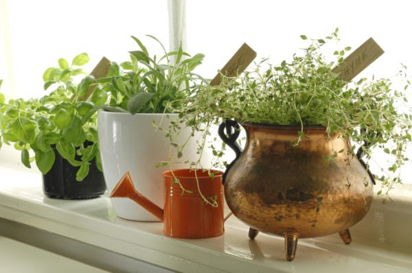 fragrant herb garden on window sill