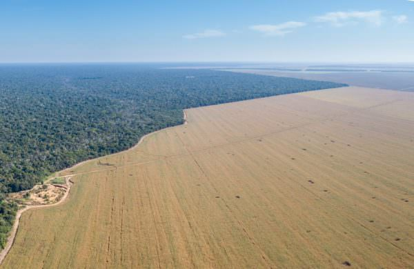 Rainforest deforestation for agriculture